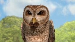 Old-Brown-Owl-Character