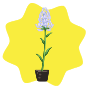 Homegrown rapunzel plant