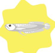 Silver-Arowana