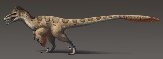 File:800px-Utahraptor ostrommaysorum update2.png