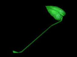 File:Plantainleaf id.png