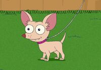 Pinky the Chihuahua