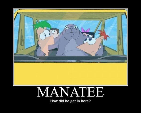 File:Manatee.jpg
