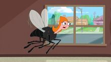 Candace fly trying to call mom.jpg