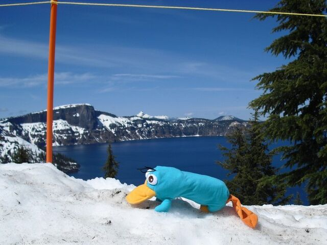 File:Perry at Crater Lake.jpg
