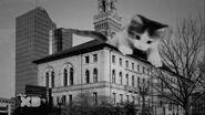 Kitten climbing on building, 1