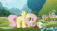 Fluttershy-and-Angel