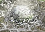 Spiderwort Mold