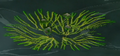 File:120px-Seaweed-like.png