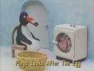 PinguLooksAftertheEggTitleCard