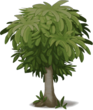 Plant Mango Tree Dead