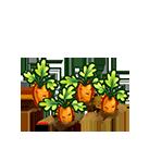 File:Farm-carrot-ripe.png
