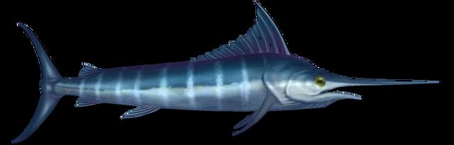 File:Fish 19.png
