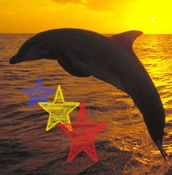 File:Free Dolphin Screensaver 14412.jpg