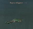 Bayou Alligator