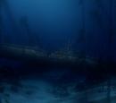 The Sharks' lair