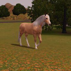 Koń w dziczy