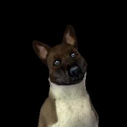 Wiedzma pies.png