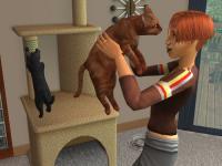Cat Hug.jpg