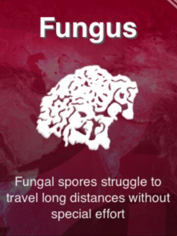 File:Fungus.jpeg