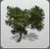 Beach Tree 2 icon