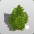 Miniature Conifer icon