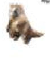 File:Lepus Marihare.jpg