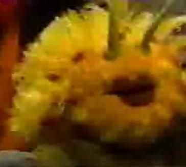 File:Larva.JPG