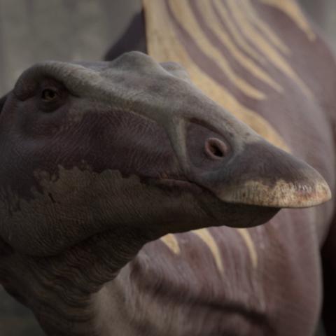 File:OuranosaurusPortrait.png