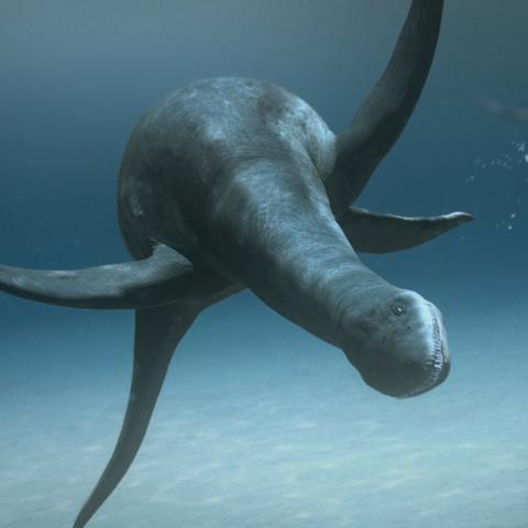 File:KimmerosaurusPortrait.png