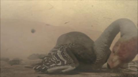 File:Gigantoraptor-1.6-11.png
