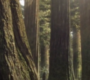 Dinosaur Provincial Park forest