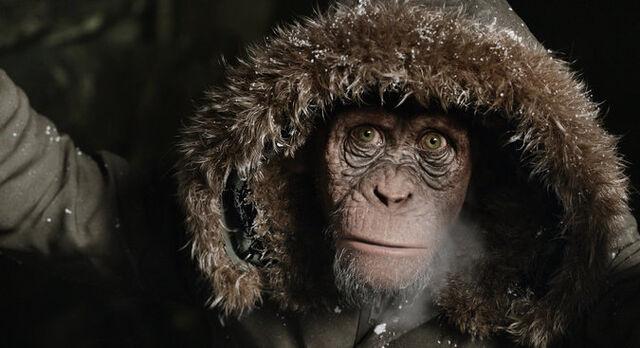 File:WPOTA Bad Ape with hoodie.jpg