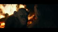 WPOTA Bad Ape 6