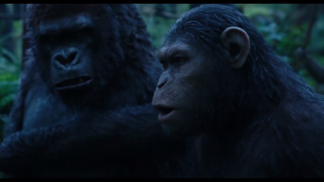 File:Caesar & Unknown Gorilla.png
