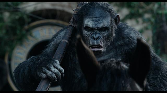 File:Koba looking angry.png
