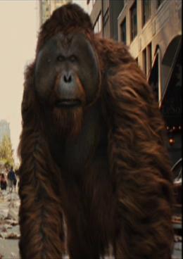 File:Orangutan.png