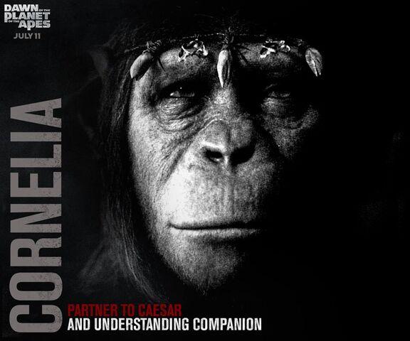 File:Cornelia and Compassion.jpg