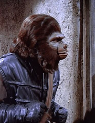 File:Gorilla guard above.jpg