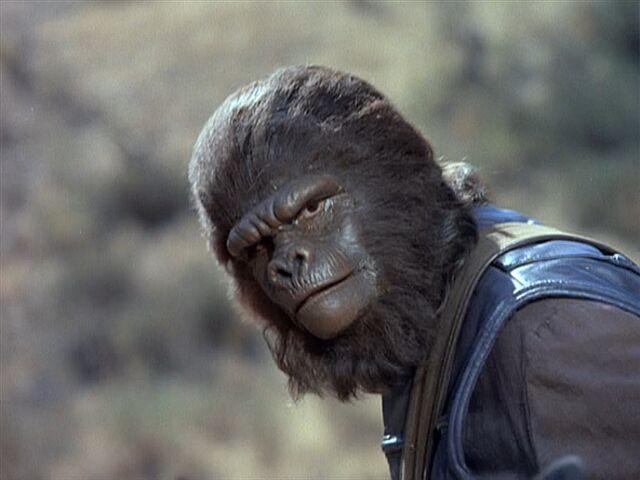 File:Second gorilla guard.jpg