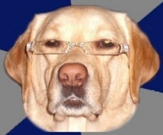 File:Racist dawg.png