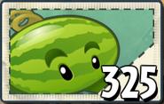 Melon seed2