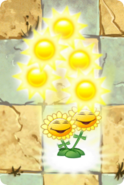 Twin Sunflower PF