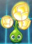 File:Gold bloom.jpeg
