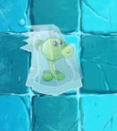Frozen Peashooter