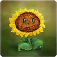 File:RealSunflower.jpg