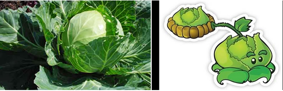 File:Cabbage.png