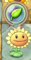 File:About To Give Plant Food Sunflower.png
