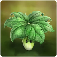 File:RealUmbrella Leaf.jpg