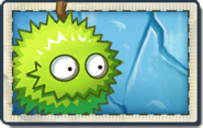 Small Chestnut Team New Frostbite Caves Seed Packet